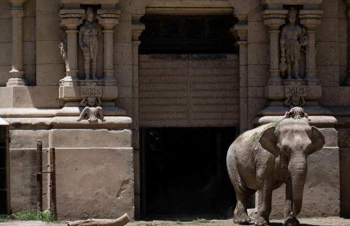 elefanta1