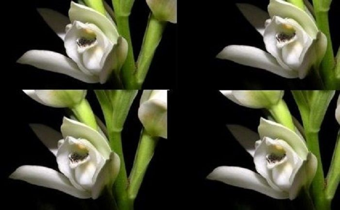 flor 1221